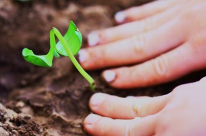 child planting in good soil