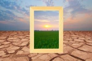 dry ground vs healthy grass
