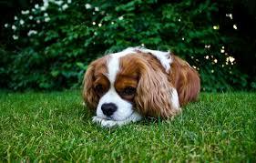 Dog Urine Protection
