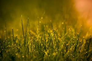 lawn after rainfall
