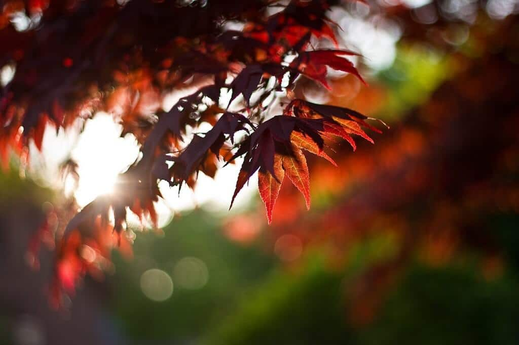 Fall is around the corner, get your yard ready for spring now!