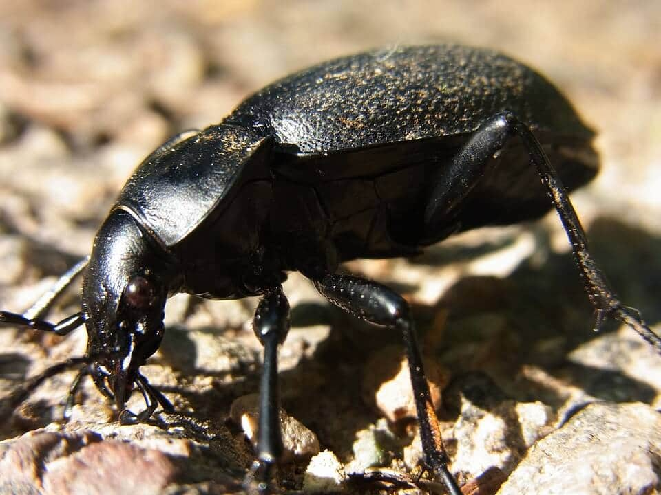 Know The Good Amp Bad Insects In Your Lawn 1 Bell Sod